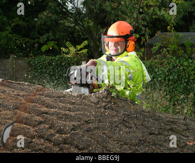 FLORA & FAUNA Trees Surgery Male tree surgeon wearing safety equipment cutting through felled tree with chainsaw - Stock Photo