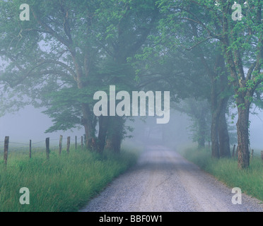Sparks Lane with a light fog lifting in early morning in Cades Cove Great Smoky Mountains National Park Tennessee - Stock Photo