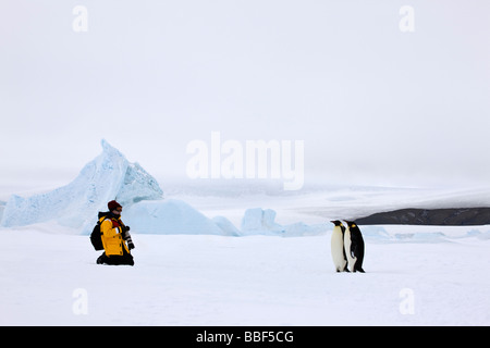 One Photographer with camera pauses in snow to photograph pair of Emperor penguins on Ice attached to Snow Hill - Stock Photo