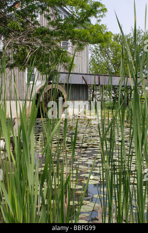 View of historic gristmil with wheel reeds in foreground water lilies leaves in pond Sauder Village Ohio focus USA - Stock Photo