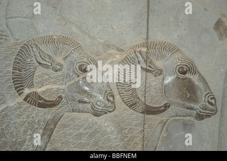 Rams head detail from a carved bas relief depicting envoys from one of Persia's subject nations at the ruins of - Stock Photo
