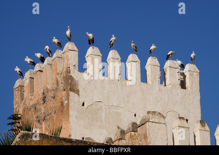 Africa, North Africa, Morocco, Fes, Fès el-Jdid, Petit Mechouar, Bab Makina, Fortress, Tower, Perched Birds - Stock Photo