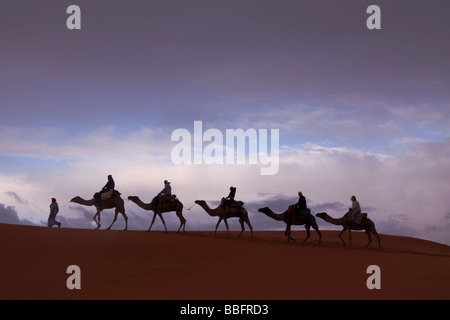 Africa, North Africa, Morocco, Sahara Desert, Merzouga, Erg Chebbi, Tourists Riding Camels, Sunrise - Stock Photo