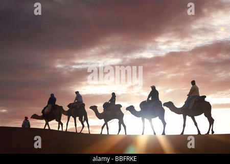 Africa, North Africa, Morocco, Sahara Desert, Merzouga, Erg Chebbi, Tourists Riding Camels at Sunrise - Stock Photo