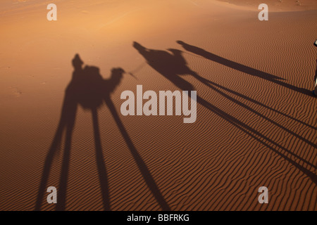 Africa, North Africa, Morocco, Sahara Desert, Merzouga, Erg Chebbi, Tourists Riding Camels, Shadows in the sand - Stock Photo