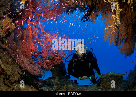Scuba diver and gorgonians. - Stock Photo