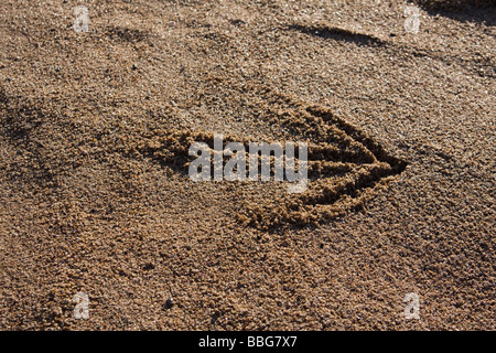 closeup of a arrow sign in sand on a beach - Stock Photo