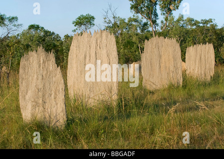 magnetic termite (Amitermes meridionalis), termite Mounds, Australia, Northern Territory, Litchfield National Park - Stock Photo