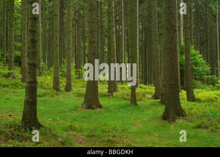 Wald forest 43 - Stock Photo