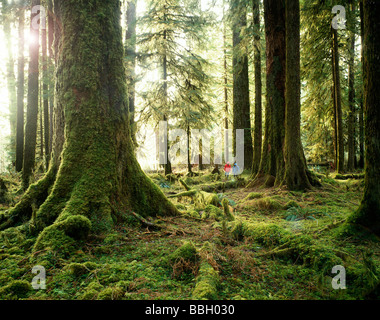Two hikers explore the beautiful Hoh Rain Forest in The Olympic National Park in Washington State's western most - Stock Photo