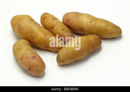 Potato (Solanum tuberosum), variety: Bamberger Hoernchen, studio picture - Stock Photo