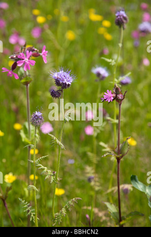 Colourful meadow of wild flowers in Spring - Stock Photo