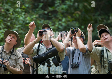 Forest birding in Subic Luzon Philippines - Stock Photo