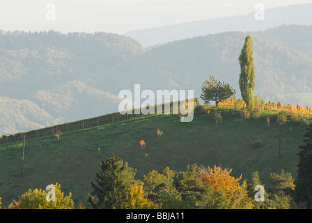 Wineyard in autumn color change, Styria, Austria, Europe - Stock Photo