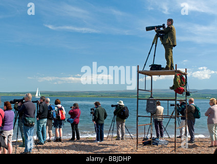 Dolphin watchers at Channory Point on the Black Isle, Ross and Cromarty, Scotland - Stock Photo