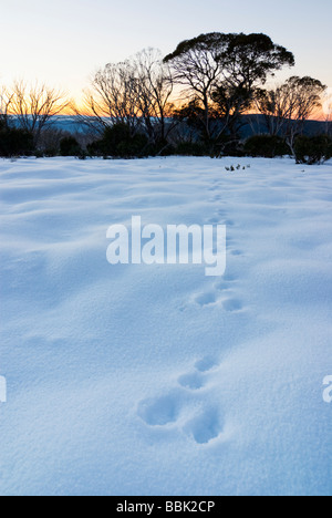 Tracks in snow at dawn - Stock Photo