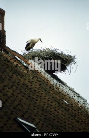 Storks Stream Deutsch