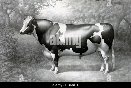 Vintage illustration of a cow - Stock Photo