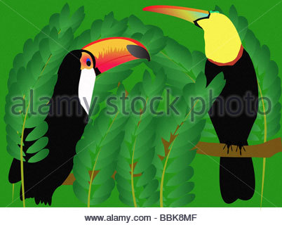 Pair of toucans perched on branch - Stock Photo
