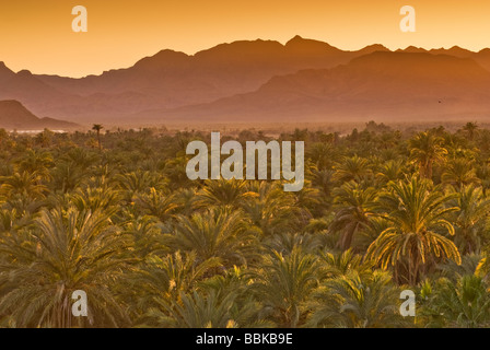 Date palms at sunset Mulege Sierra de Guadalupe in distance Baja California Sur Mexico - Stock Photo