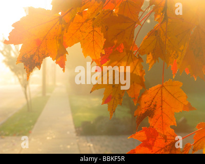 fall leaves yellow - Stock Photo