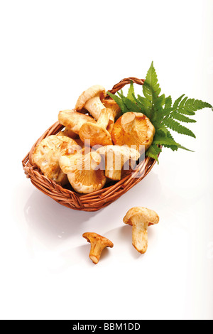 Chanterelle mushrooms with fern leaves in a small basket - Stock Photo