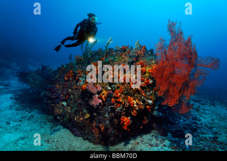 Diver watching Sea Fans (Gorgonaria) on coral reef, colorfully overcrusted with corals, Gangga Island, Bangka Islands, - Stock Photo