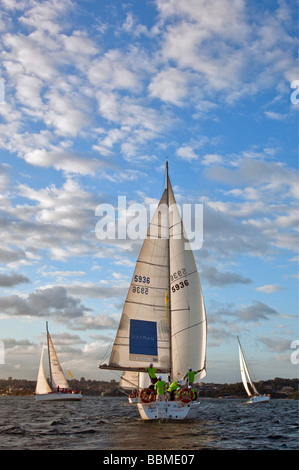 Australia New South Wales. Sailing in the late afternoon in Sydney harbour. - Stock Photo