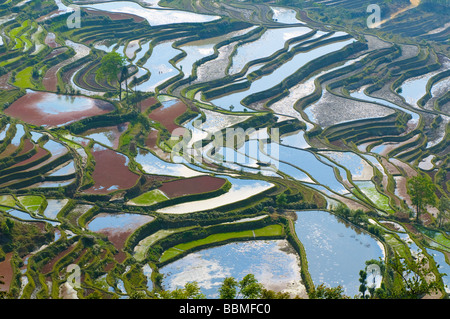 rice terraces of yuanyang yunnan china - Stock Photo