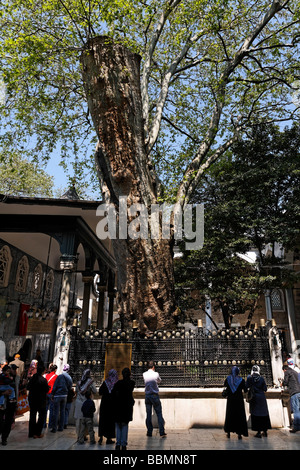 Eyuep Sultan Mosque, courtyard, Muslim believers pray in front of a mighty sycamore tree, Eyuep village, Golden - Stock Photo