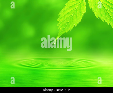 Ripples formed by water droplet falling from a leaf - Stock Photo