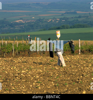 Scarecrow in the middle of a field