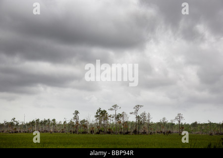 Islands of cypress trees dot the landscape of Big Cypress National Preserve, which borders the Everglades National - Stock Photo