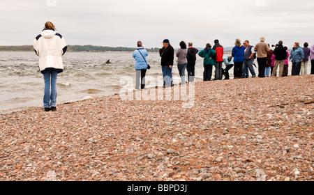 bottlenose dolphin watching on Black Isle, Scotland, UK - Stock Photo