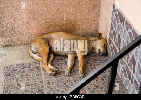 Patzicia,Guatemala;Central America,Stray dog sleeping in stairwell - Stock Photo