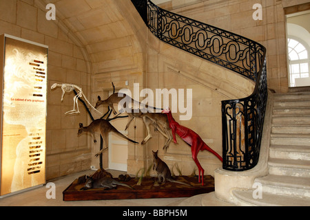 STAIRWAY OF THE MAIN ENTRANCE, MUSEUM OF NATURAL HISTORY, LE HAVRE, SEINE-MARITIME (76), NORMANDY, FRANCE