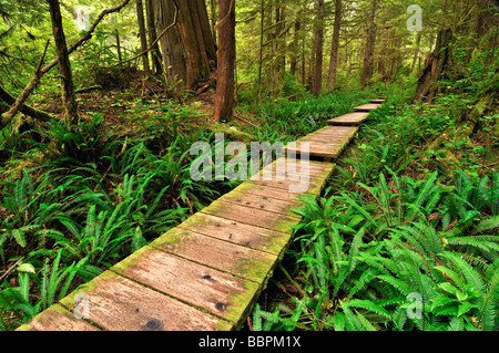 Path made of wooden beams, leading through the rainforest to Sand Point, Olympic National Park, Washington, USA, - Stock Photo