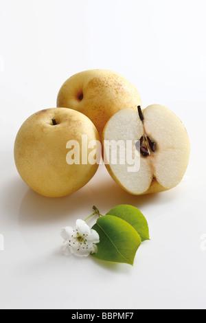 Nashi Pears and blossoms (Pyrus pyrifolia) - Stock Photo