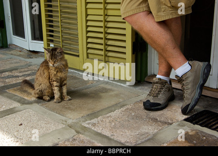A normal toed descendant of Ernest Hemingways famous polydactyl cats at home museum 'Key West Florida' - Stock Photo