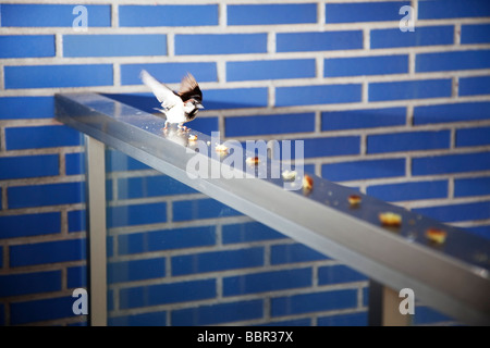 Sparrow escaping with food from a balcony. - Stock Photo