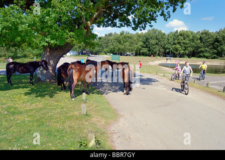 Children cycling past horses at a campsite in the New Forest - Stock Photo