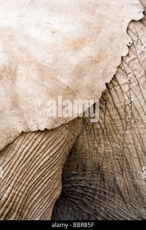 Elephant Patterns - Amboseli National Park, Kenya - Stock Photo