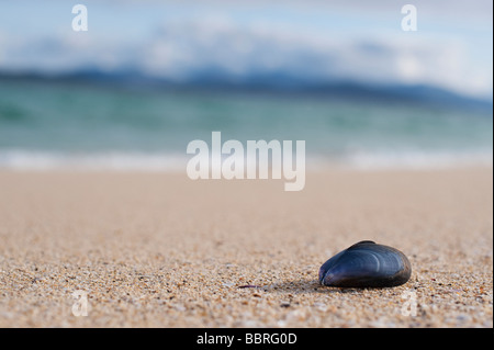 Mussel seashell on a beach, Isle of Harris, Outer Hebrides, Scotland - Stock Photo