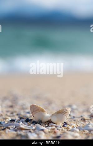 Open seashell on a beach, Isle of Harris, Outer Hebrides, Scotland - Stock Photo