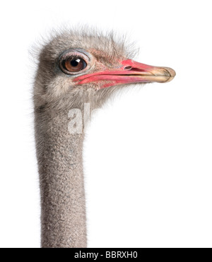 close up on a ostrich's head in front of a white background - Stock Photo