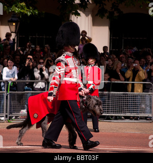 Trooping the Colour 2009, the Irish Guards mascot an Irish Wolfhound - Stock Photo