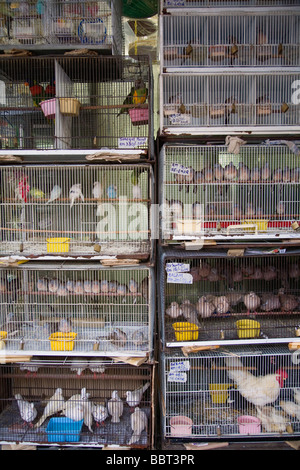 Pet birds and chickens for sale at a shop on Jalan Sultan in Chinatown, Kuala Lumpur, Malaysia - Stock Photo
