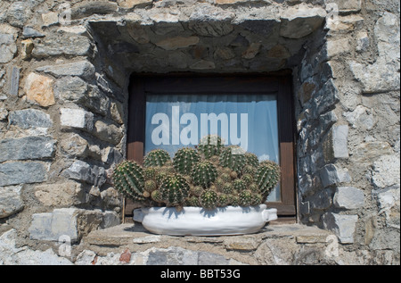 Succulent Plants in Pots Displayed on Window of a stone wall house - Stock Photo