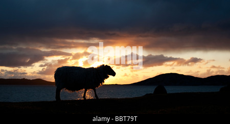 Sheep silhouette against a sunset over Sound of Taransay , Isle of Harris, Outer Hebrides, Scotland - Stock Photo