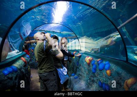 Gardaland Sea Life Aquarium, Castelnuovo del Garda, Veneto, Italy - Stock Photo